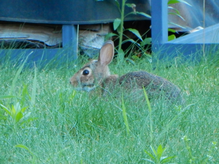 This is the littlest bunny we've seen this year.