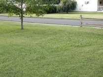 We're not the only ones. This is Maddie's friend. She mows her lawn but leaves the clover higher than the grass.