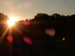 Sun burning away the fog at the cemetery