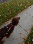 Some leaves have already fallen. Maddie is looking at the black squirrels.