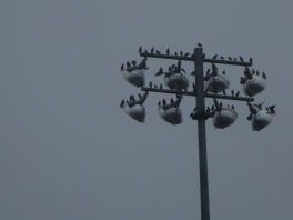 I don't know how many birds are on this post.