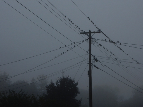 Nobody seems to want to fly in the fog.