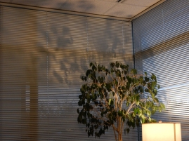 Mornings are now dark to the point that I need to turn that lamp on in my office. I do like the shadows.