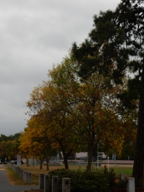 Fall is coming without too many bright colors. the leaves are falling, though.