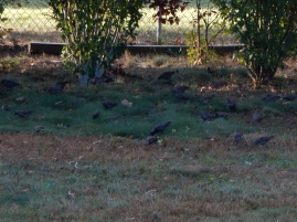 These guys are feeding in our back yard. Maddie was content to watch them.