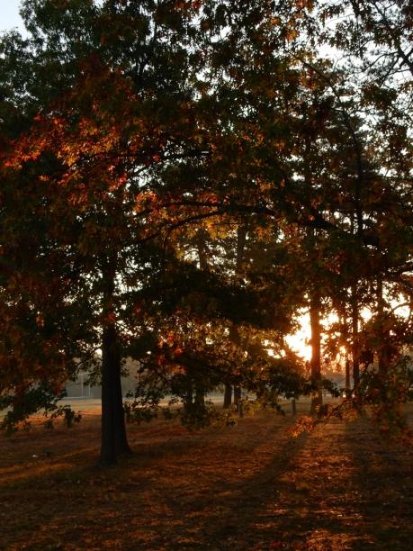Autumn Sunshine