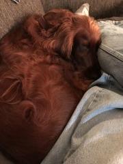 Itty-bitty Maddie dog.