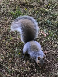 """I'm foraging, but if you wanted to give me a nut, I'd be OK with that."""