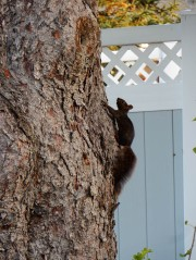 One of our little buddies. Yeah, we left him a peanut