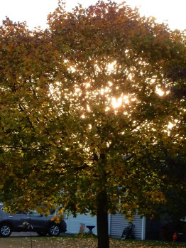 I like how the sun shines through the thinning leaves.