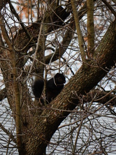 This guy seems to like our dogwood tree.