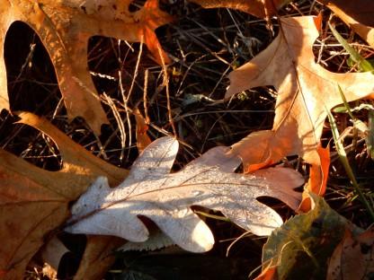 Autumn leaves are still crisp.