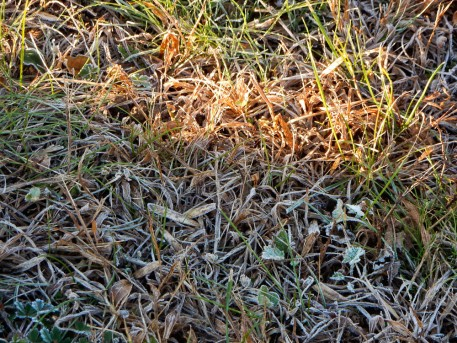 The frost disappeared quick where the sun hit.