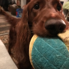 """""""You've been up for 5 minutes. You want to play?"""""""