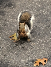 """""""Yum! Thanks for this bit of nut. I was getting hungry."""""""