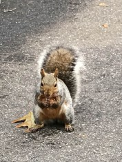 Ok, you can have a peanut.
