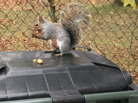 I put a few nuts on the trash can for Sally