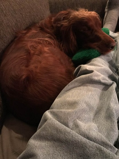 Maddie brought me her shamrock this day. Then she decided to use it as a pillow.