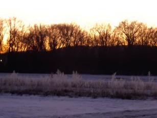 Frozen field at sunrise. It was 11°f (-11.7°c)