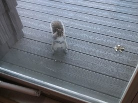 """""""The nice lady said I could have some nuts."""""""