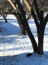 The black squirrel never comes too close, but he likes the peanuts just the same.
