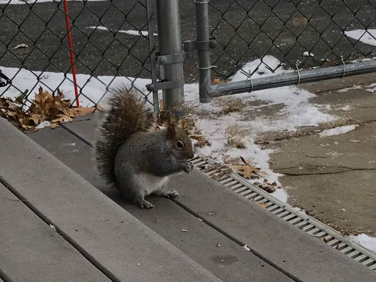 """""""Thanks! The pieces of walnuts really help on a cold day."""""""