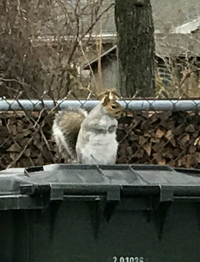 Yeah, this guy doesn't look hungry, but he's got to keep up his weight as it gets colder.