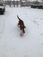 """""""It snowed - Let's play ball"""""""