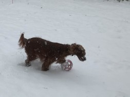 She loves the snow. She would have stayed out in the storm all night.
