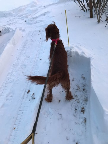 "Maddie is checking out the ""rest areas"" I cleared off the side of her path."