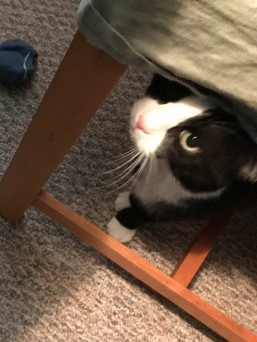 That's MuMu under the chair. I was trying to coax her out for a picture.