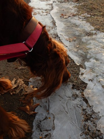 Maddie! I wanted a picture of the ice.
