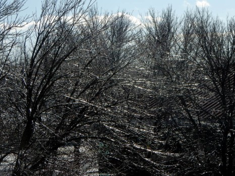 Every branch - every twig - covered in ice.