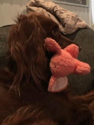Pinky is my favorite toy. Maddie brings it to me when she wants me to sit with her but I don't want to sit. I can't refuse.