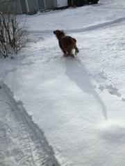 """I LOVE snow!"""