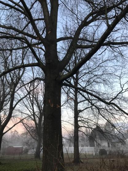 A little bit of fog left in the neighborhood.