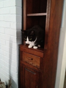 This is a narrow bookcase that I made from the recycled bits of a waterbed I had made earlier. MiMi likes it fine.