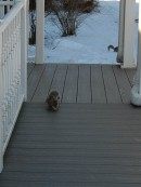 """Here! Over here! I need a peanut."""