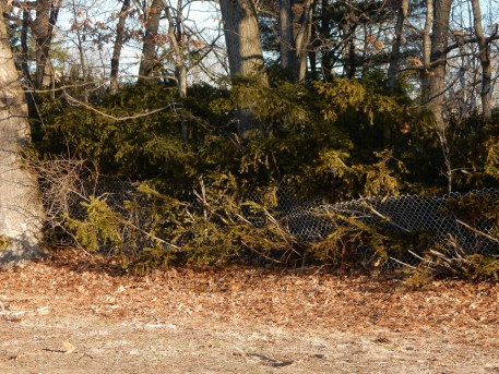 Some damage from the recent heavy wet snow storms.