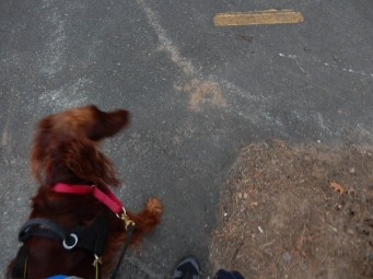 A little blurry, but Maddie is pushing me into the driveway to the park. The long way.