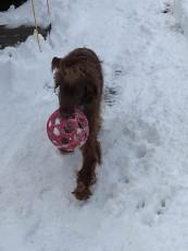 """""""Yay! I have my ball"""""""