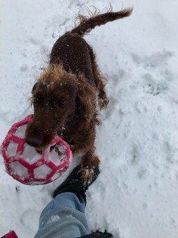 """""""Here, take the ball and throw it for me."""""""
