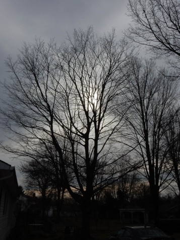Home sweet tree.