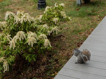 Rainy day. Wet squirrel, but he has a peanut, so he's happy.