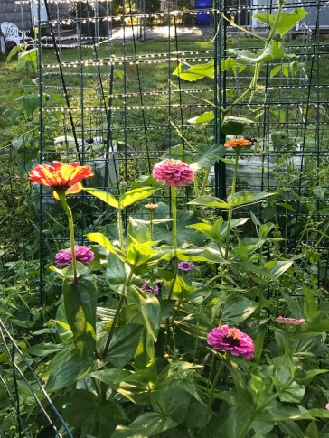 The Editor adds flowers to her vegetable garden to attract pollinators and friends.