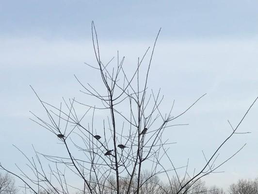 Birdy birds