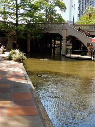 Ducks seem to like the River Walk too.