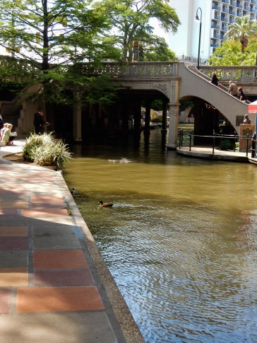 Ducks seem to like the River Walk too.