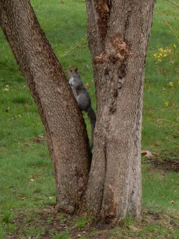 Skittish squirrel doesn't know that I'm handing out peanuts.