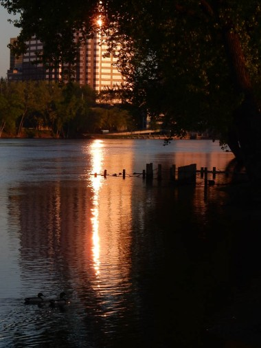 The sun is reflected in the CT River and the ducks are heading to it.
